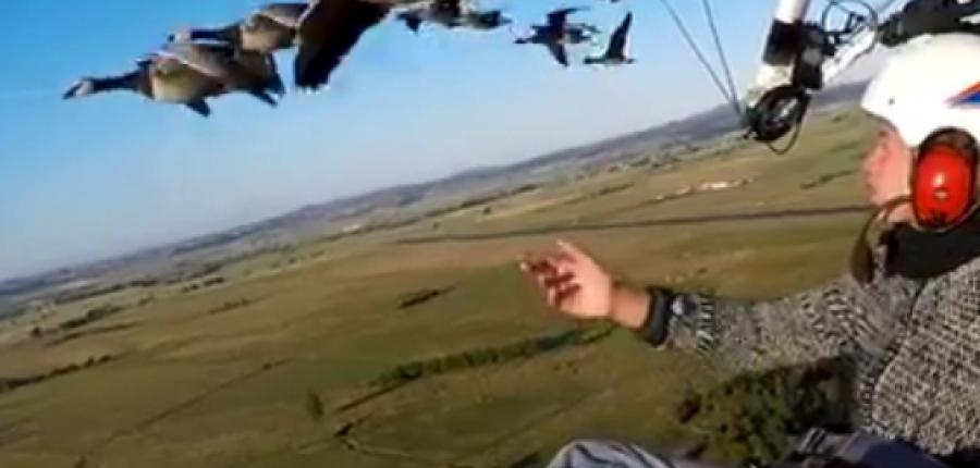 Video: La aeronave donde un naturalista vuela junto a gansos salvajes