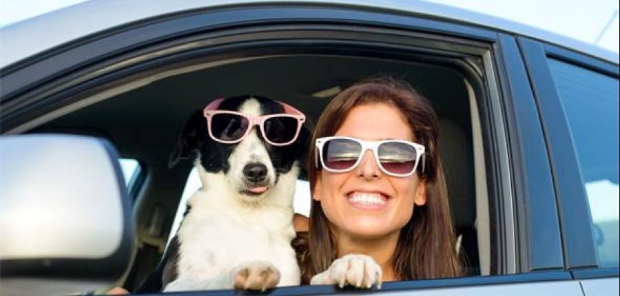 Toyota te da unos tips para viajar con tu mejor amigo